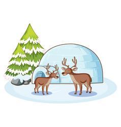 reindeers and igloo in winter vector image