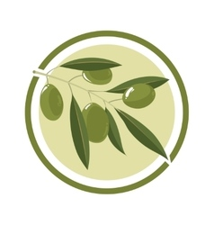 set white olives with leafs vector image