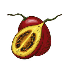 tamarillo fruit sketch isolated icon vector image
