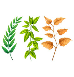 three types of leaves vector image