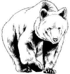 bear drawn with ink from hands vector image
