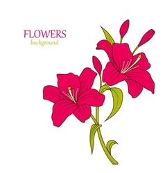 Linear Colored Sketch of Beautiful Lily Flowers vector image