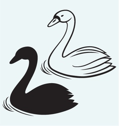 Swans on pond vector image
