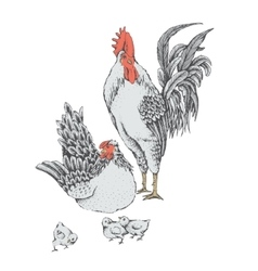 Family day of chicken birds vector