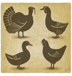 poultry black silhouette set domestic fowls icons vector image