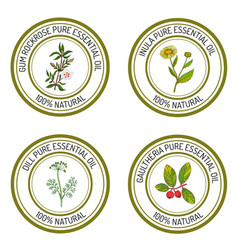 Set of essential oil labels gum rockrose inula vector