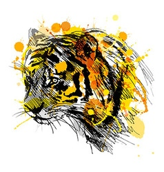 Colored hand sketch of the head of the tiger vector image
