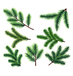 pine tree branches christmas fir tree branch vector image