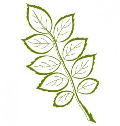 Leaf of dog rose vector vector