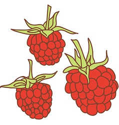 ripe raspberry isolated on white background Sketch vector image