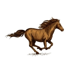 Running horse sketch for equestrian sport design vector image