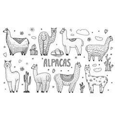 set of cute alpaca llamas or wild guanaco on the vector image
