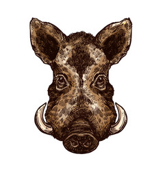 Boar pig or hog wild animal isolated sketch vector