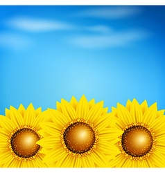 Decorative summer background with sunflowers vector