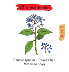 Medicinal herbs of china chinese quinine vector