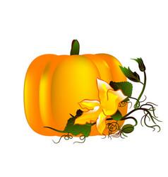 Pumpkin abstract design vector