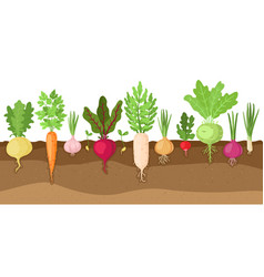 planted vegetables cartoon root growing vector image