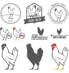 Set vintage chicken meat labels and stamps vector