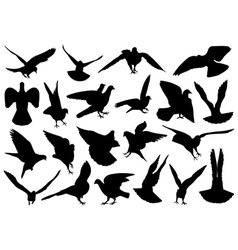 Set of different doves vector image vector image