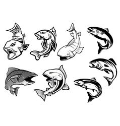 Cartoon salmons fish set vector image