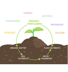 Diagram of nutrients in organic fertilizers vector