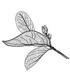 Leaves contours on a white background vector
