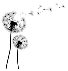 Silhouette of a dandelion vector
