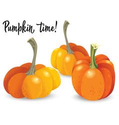 three different orange pumpkin isolated on white vector image