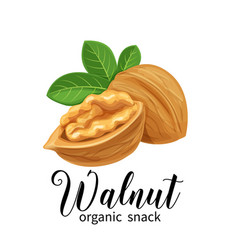 Walnut in cartoon style vector