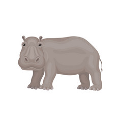 Wild gray hippo standing isolated on white vector