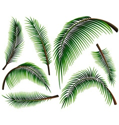 Different sizes of palm leaves vector image