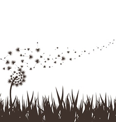 grass with dandelion background vector image