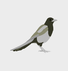 In flat style of magpie vector