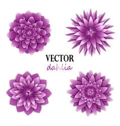 Light lilac dahlias collection vector