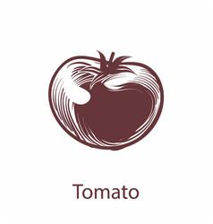 tomato object botanical hand drawn vegetable vector image