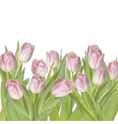 Tulips isolated on white EPS 10 vector image