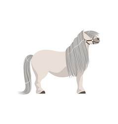 White pony with grey mane thoroughbred horse vector