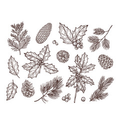 Christmas plants sketch fir branches pine cones vector