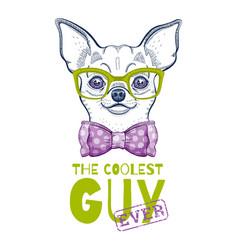 cute chihuahua dog t-shirt print design cool vector image