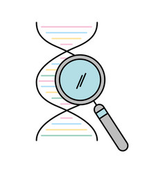 dna molecule with magnifying glass vector image