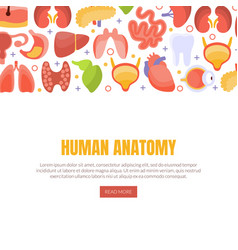 human anatomy landing page template with internal vector image
