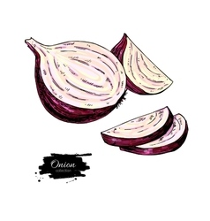 Red Onion hand drawn vector