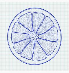 Orange slice blue hand drawn sketch on lined vector