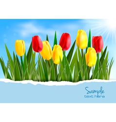 Tulip background vector