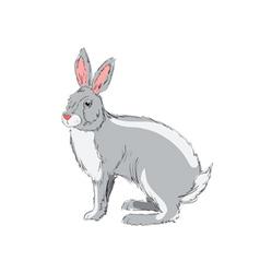 hand drawn rabbit vector image vector image