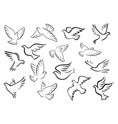 Pigeon and dove birds silhouettes vector image vector image
