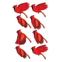 Cardinal bird flying animation vector
