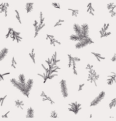 botanical seamless pattern with evergreens vector image