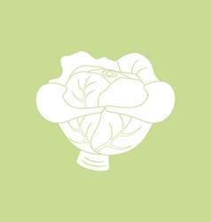 Cabbage Vegetable Icon vector image