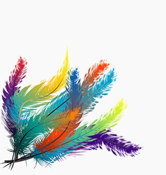 Colorful feathers background vector image